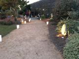 Moonlight in the Garden, JC Raulston Arboretum
