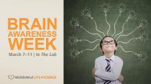 Brain Awareness Week at the Museum of Life and Science