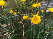 Spring blooms at JC Raulston Arboretum in Raleigh