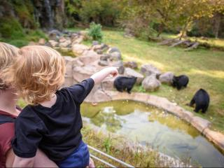 Finding the bears at the Museum of Life and Science