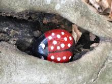 Raleigh Rocks, a Facebook group, is encouraging people to paint and hide painted rocks