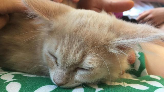 Purr Cup Cafe, which hopes to open a permanent cat cafe in spring 2018 in Raleigh, organized a pop-up cafe at Read With Me, the new children's book store in downtown Raleigh.