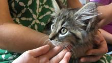 IMAGES: Sunday's Pop-Up Cat Cafe at Read With Me in Raleigh
