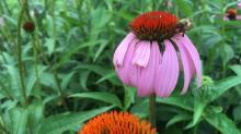 IMAGES: Summer blooms at Biltmore