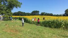 IMAGES: Raleigh's sunflowers along the Neuse River Greenway