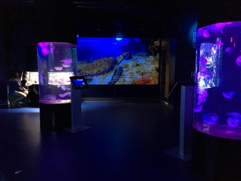 Expanded Wiseman Aquarium at Greensboro Science Center