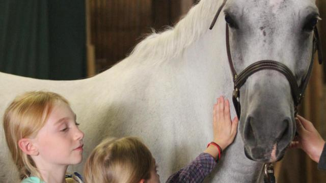 The Arabian Horse Association will offer the tour in Raleigh this week. Courtesy: Arabian Horse Association