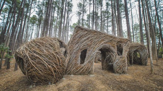 The Patrick Doughtery Sculpture at the Museum of Life + Science in Durham was recently removed.