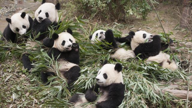 Nubers Tractor (Panda Bears Playhouse)