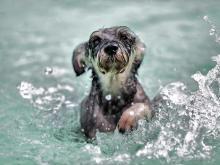 Adult swim lesson
