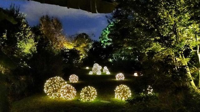 Courtesy: JC Raulston Arboretum