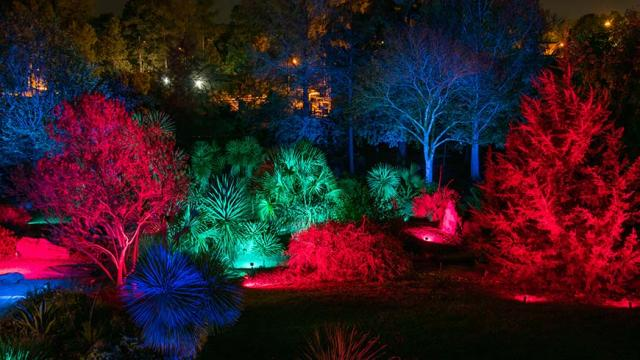 Moonlight in the Garden at JC Raulston Arboretum