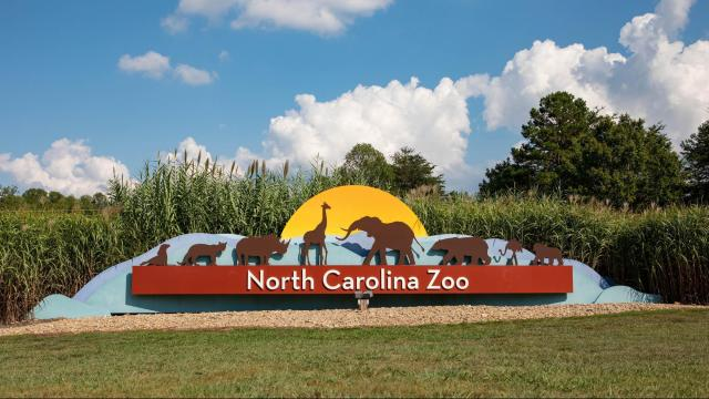 Courtesy: NC Zoo