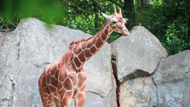 Courtesy: N.C. Zoo