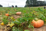 IMAGES: Take the Kids: Millstone Creek Orchards gears up for busy pumpkin season