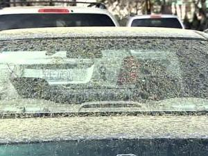 High Pollen Count Leads to Early Start of Allergy Season