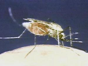 New Recommendations may Help Travelers Prevent, Treat Malaria