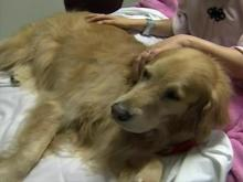 Hospital-bound patients get love from dogs