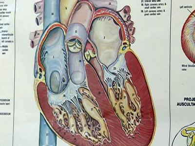 A diagram of the human heart.
