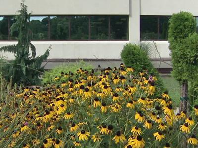 A view of the gardens at Duke Raleigh Hospital's cancer center.