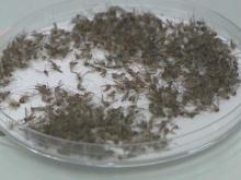 Health Team: West Nile virus Q&A