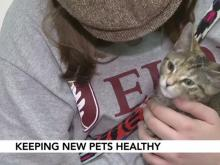 Clear the Shelters: What vaccinations your new pet will need