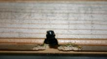IMAGE: How to spot carpenter bees and save your home