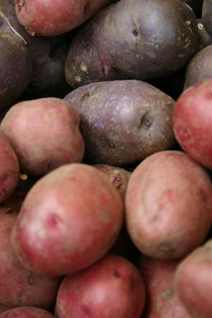 The red potatoes were beautiful. Photo by Dolly R. Sickles.