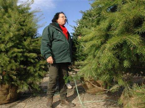 Diane Lulek, a horticulturist, with Weston Nurseries in Hopkinton, Mass., walks among the Korean fir trees raised for sale as living Christmas trees, Saturday, Nov. 10, 2007. (AP Photo/Josh Reynolds)