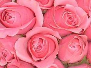 Pink and white are my favorite rose colors ... though they're never my first choice for flowers.