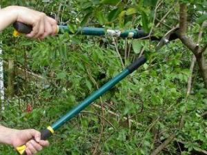Basic shrubbing
