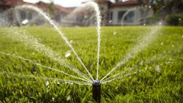 No longer must you choose between your lawn and saving water. Experts say there are ways to save both water and money that won't hurt your turf.
