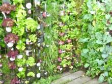 Vertical gardening can help growing veggies flourish