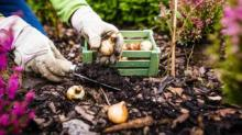 IMAGE: How To Plant Bulbs In Fall For Beautiful Spring Flowers