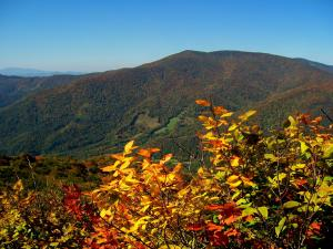 Fall colors are peaking now in the higher elevations.  Arthur Griffith of the Nature Conservancy led a small group of hikers up to the bald on Big Yellow Mountain where you can see Table Rock, Hawksbill Mountain, Grandfather Mountain and Roan Mountain in a spectacular panoramic sweep.