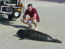 Gray seal is rare sight at NC coast