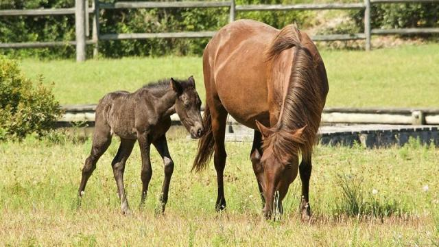Outer Banks town offering chance to name newest foal