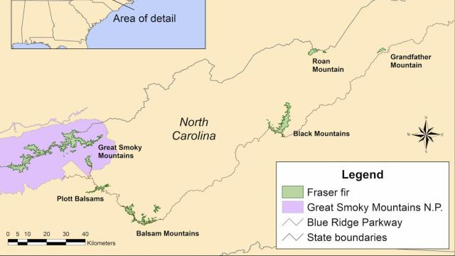 Fraser firs are only found on a few small, island-like populations in the Southern Appalachians -- mostly in North Carolina