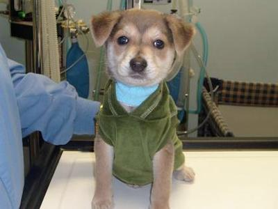 Kobe, a puppy rescued by the Oxford Veterinary Hospital, needs surgery to correct a cleft palate.