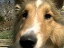 "In November, WRAL News chose three dogs to work with a trainer. This week, we revisited the ""Bad Dogs"" to see if the training did away with their bad behaviors."