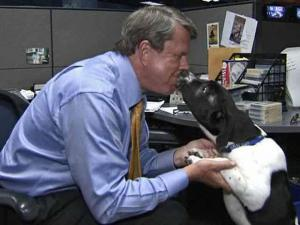 WRAL's official newsroom dog, Tracker, a 4-month-old basset-hound mix, gives a kiss to anchor David Crabtree.