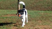 IMAGE: 'Vote every day' to win a new dog park for Raleigh