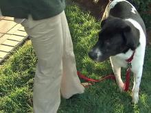 Tracker to appear at AKC Responsible Dog Ownership Day event