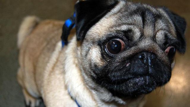 AKC Responsible Dog Ownership Day