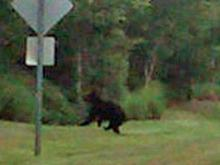 Bear killed on highway in Zebulon