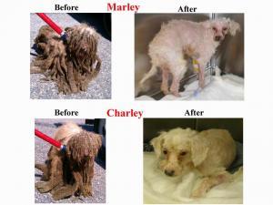 Photos courtesy SPCA Alliance of NC