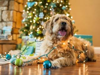 Holiday smells, sights and sounds can overstimulate pets.