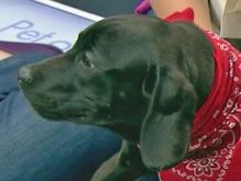 Pet of the Day: May 16, 2013