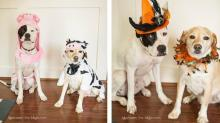 IMAGES: Fit is key when picking Halloween costumes for pets