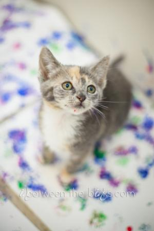 The 9th annual Kitten & Puppy Art Show and Open House will be held Friday, Nov. 22, 2013, from 6 to 9 p.m. at the SPCA of Wake County.
